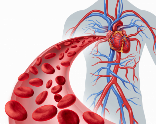 An angiography examines the blood vessels, arteries, and veins throughout the body.